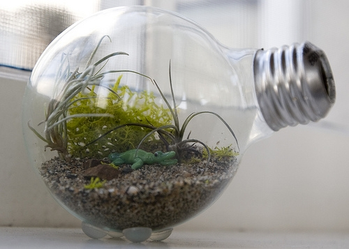 How To: Mini Lightbulb Terrarium | Man Made DIY | Crafts for Men